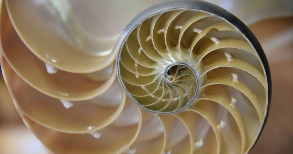 nautilus-cutaway-shell-1024x683